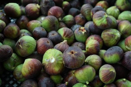 Figs anyone