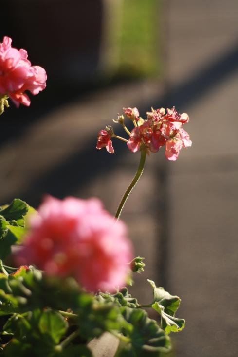 fiore flowers 4