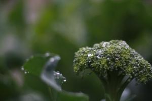 new broccoli